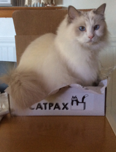 gertie-catpax-box-unedited